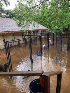 Little River Band starts Fund Raiser helping Animals trying to survive Hurricane Harvey